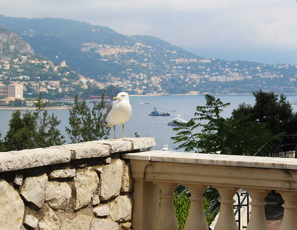 Bird Monaco